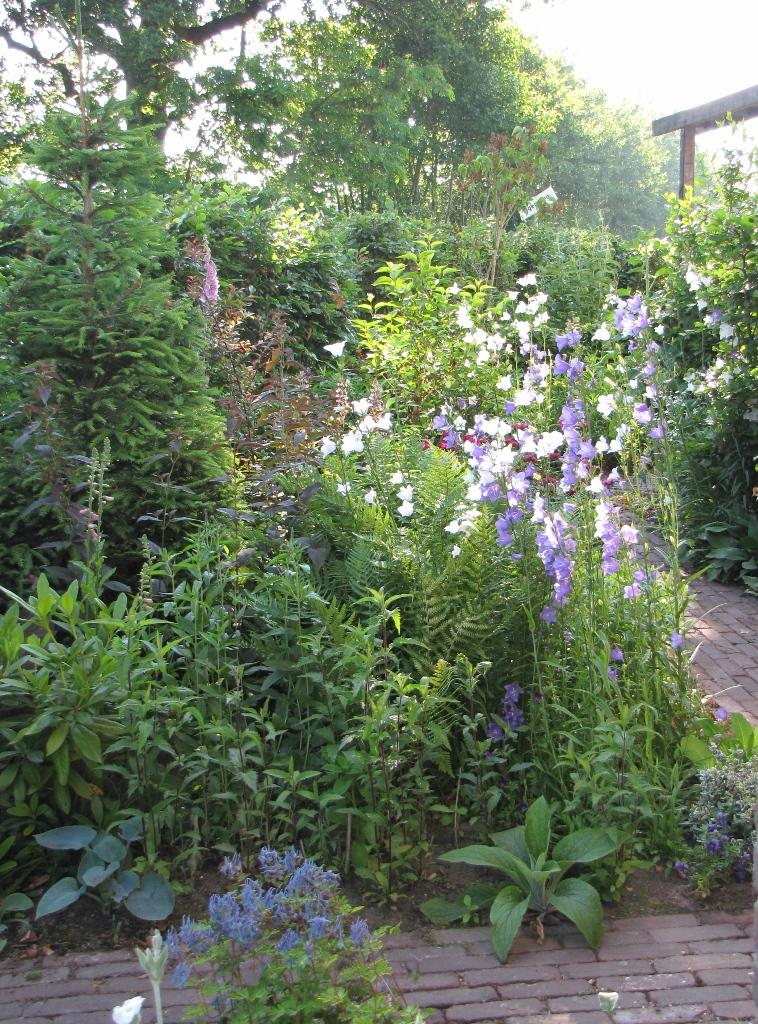 tuin in voorjaar