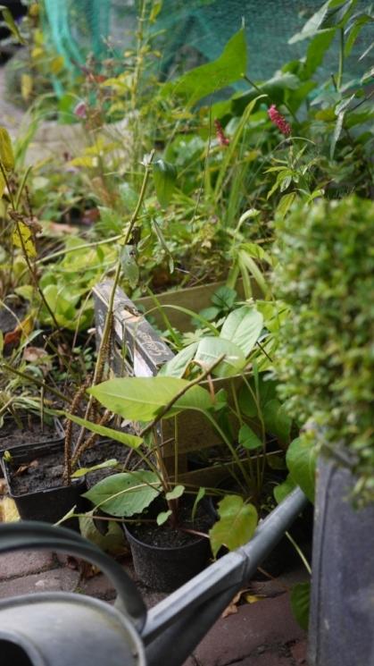 Stekjes uit de tuin