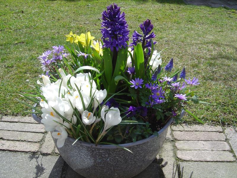 voorjaarsbollen; soeppan; tuin;