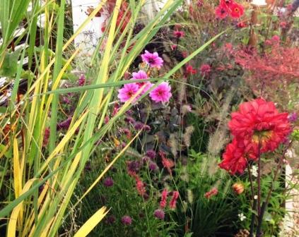 Gespot op de Woonbeurs in 2012, deze spannende plantencombinatie.