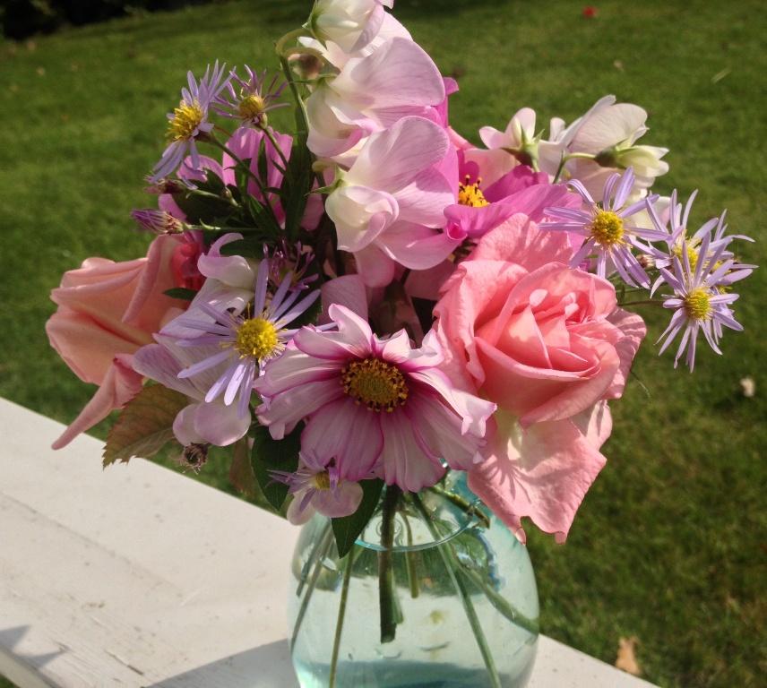 Zelfs in Oktober nog volop: rozen, Cosmea Candy Stripes, Aster en Lathyrus