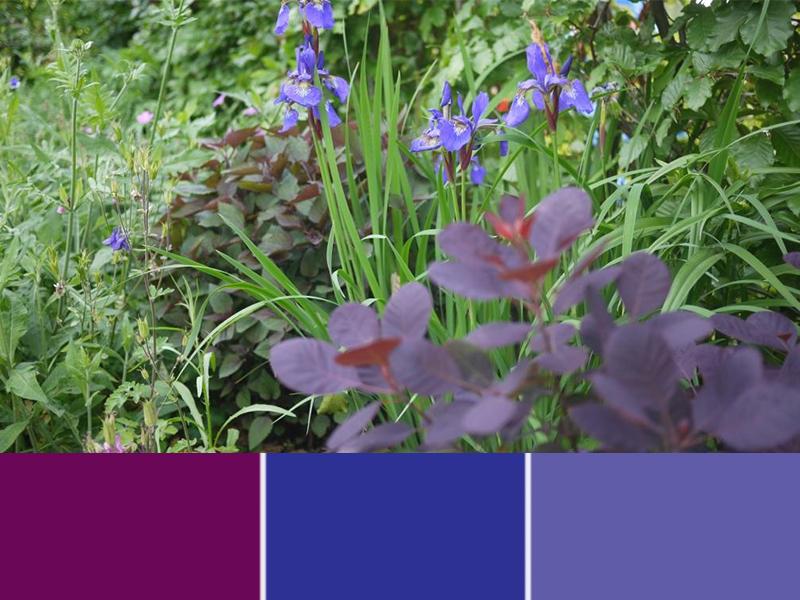 Door gebruik te maken van kleuren die dicht bij elkaar liggen, ontstaat er een rustig plantenvak.