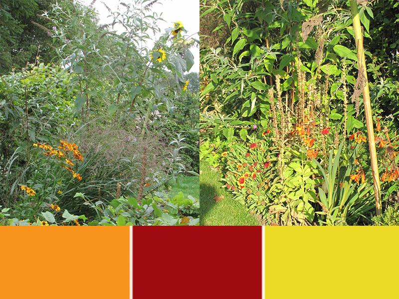 Hoe groter het contrast in bladvorm en kleur, des te spannender.