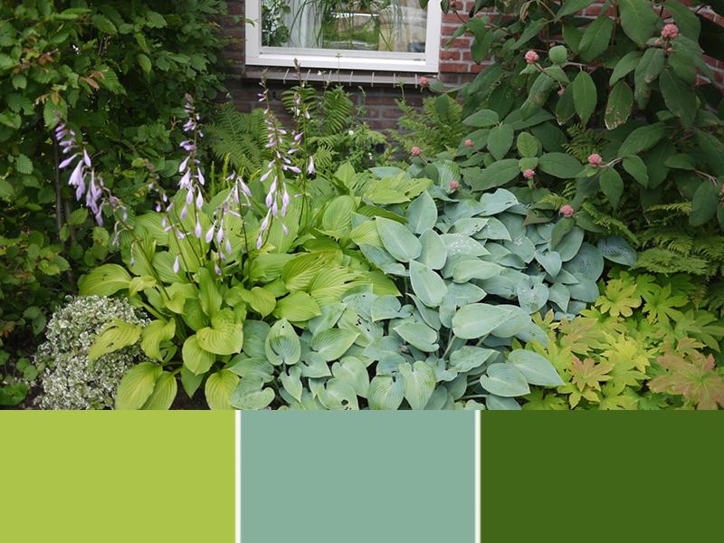 Deze plantencombinatie wordt spannend door de verschillende kleuren groen hostablad.