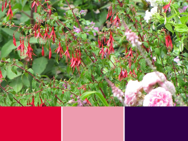 Lichtroze roos met felroze vaste Fuchsia.