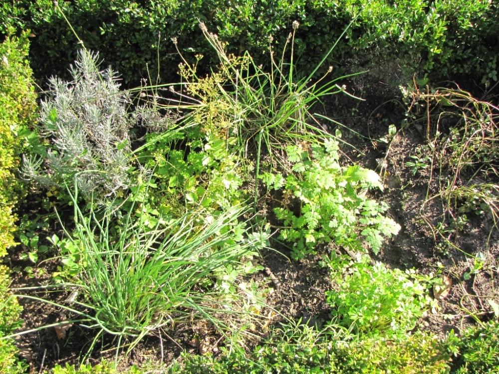 Kruiden uit eigen tuin; bieslook, peterselie, lavender, kervel en meer