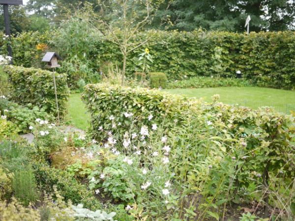 tuin zomer