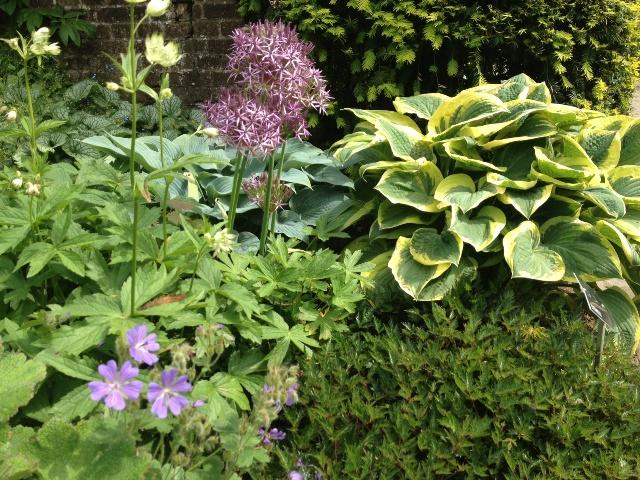 Kasteeltuin Hemmen: Hosta, Geranium en Aliums