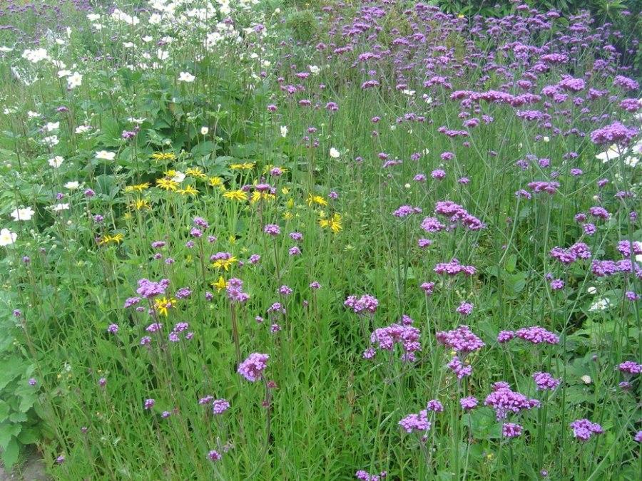 Nice Flower border - Heligan