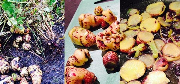 Gewokte knolcapucien vergeten groente recept gekookt of rauw
