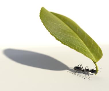 mier met blad