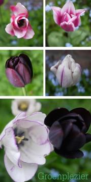 Tulpen uit de tuin
