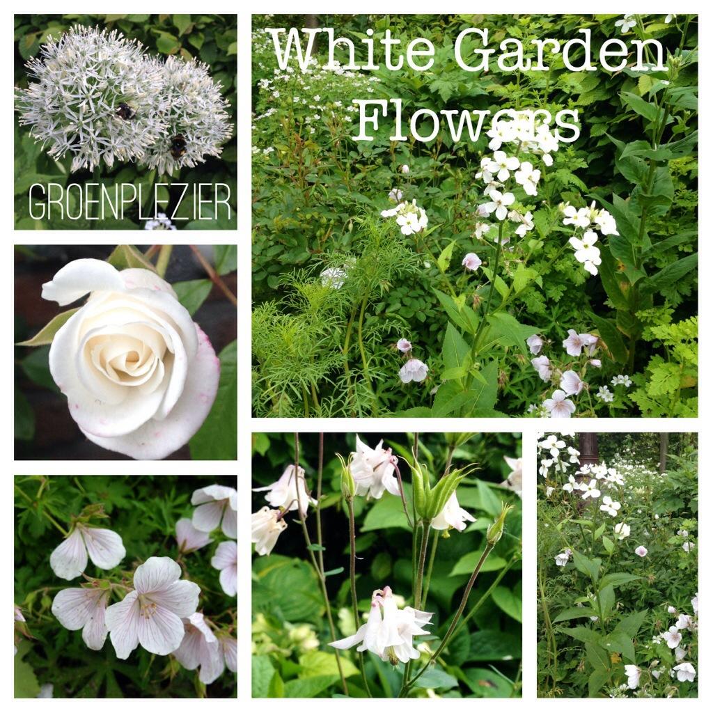 sissinghurst_white_flowers