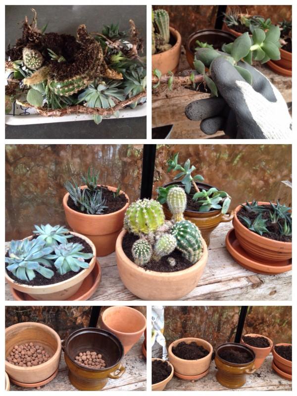 vetplanten cactus stek woontrend groen