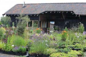 Kwekerij midden Nederland