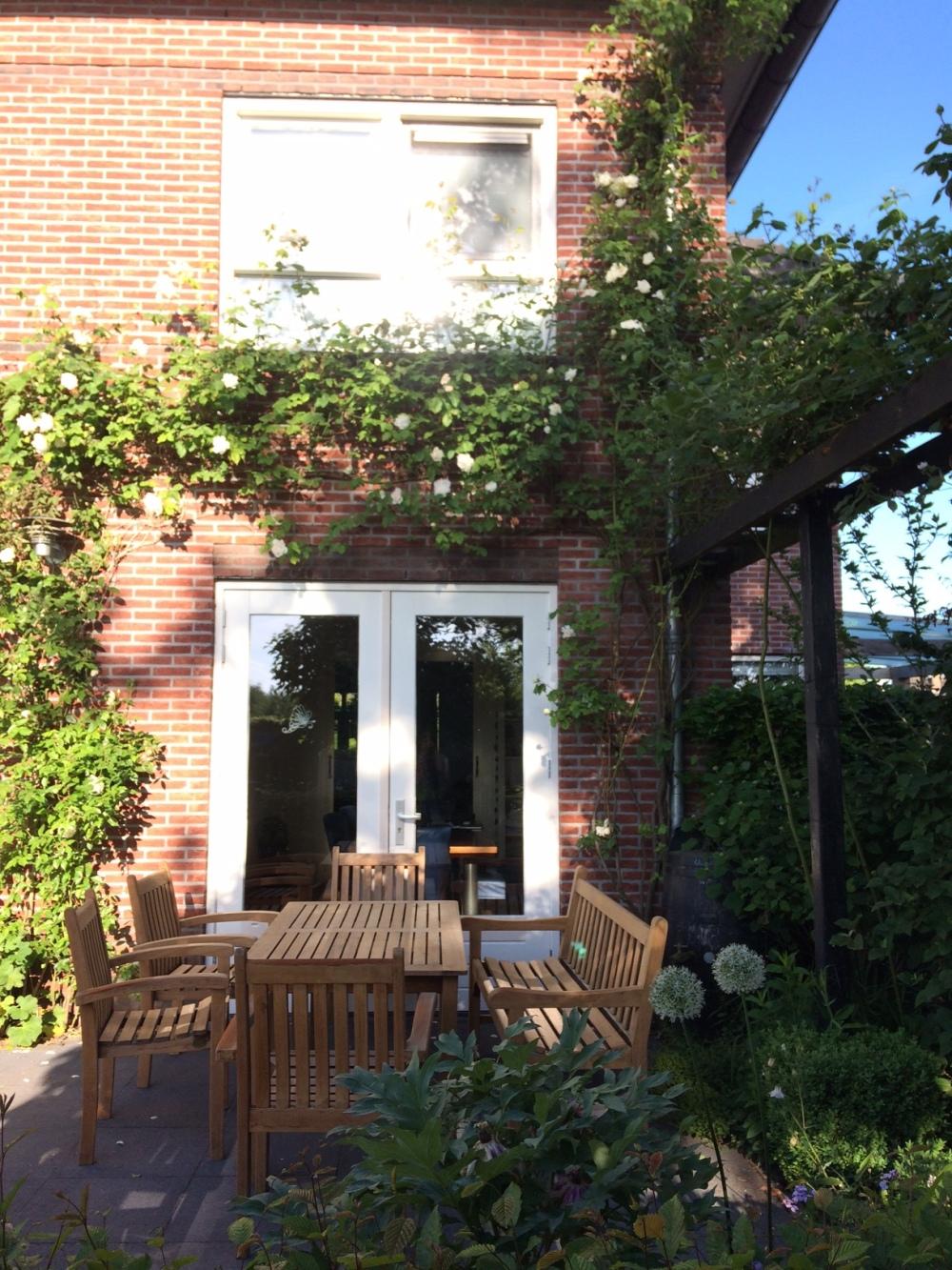 achtertuin_backyard_garden_white_rose_madame_plantier